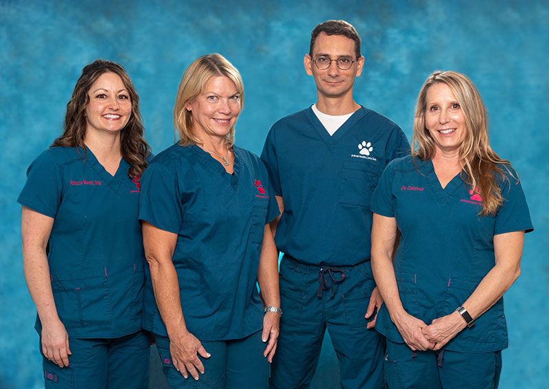 Animal Health Care Clinic Veterinarians, Clearwater FL